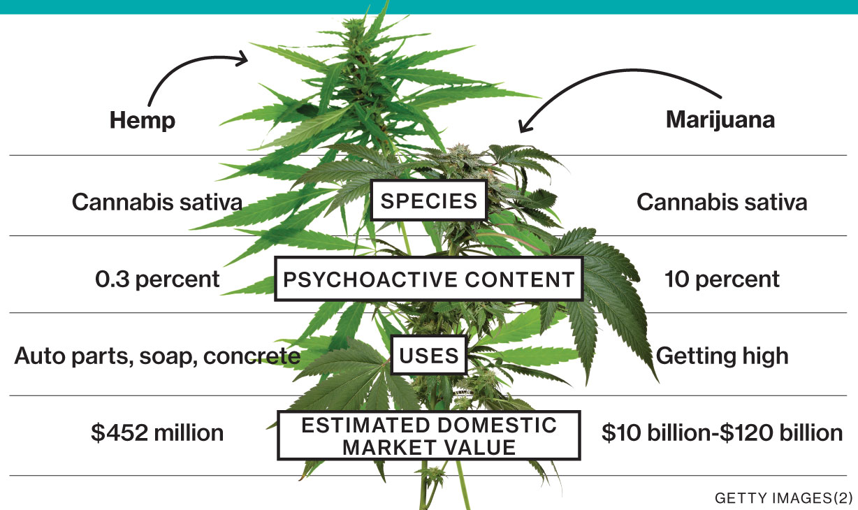Why The USA Should Be In The Hemp Business